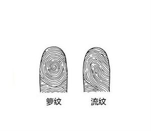 手指指纹图解...